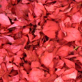 Dried Red Rose Petals
