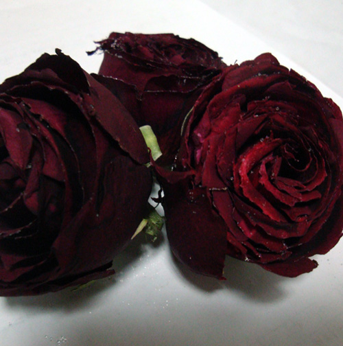 Freeze Dried Rose